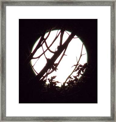 Moonshine 1 Framed Print