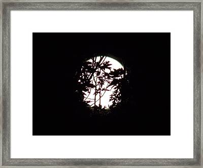 Moonshine 9 Beyond The Forest Framed Print