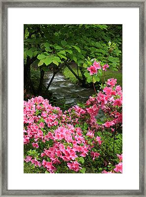 Framed Print featuring the photograph Moonshine Creek Rhododendron Bloom - North Carolina by Mountains to the Sea Photo