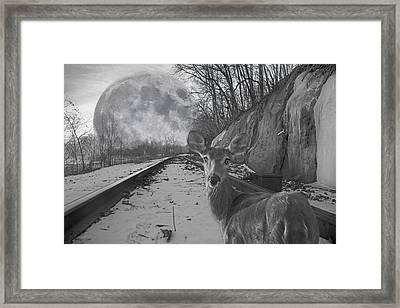 Moonshine Deer Tracks Framed Print by Betsy Knapp