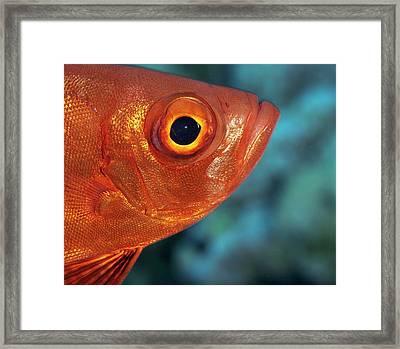 Moontail Bullseye Framed Print