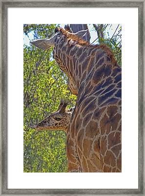 Framed Print featuring the photograph Mooom Im Bored by Gary Holmes