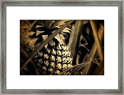 Moorea Pineapple Framed Print