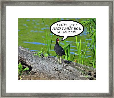 Moorhen Miss You Card Framed Print by Al Powell Photography USA