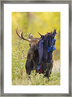 Moose 1 - Hammock 0 Framed Print by Sandy Sisti