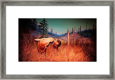 Moose ..algonkian Framed Print by Larry Trupp