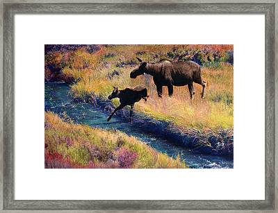 Moose And Calf Framed Print by Cindy McIntyre