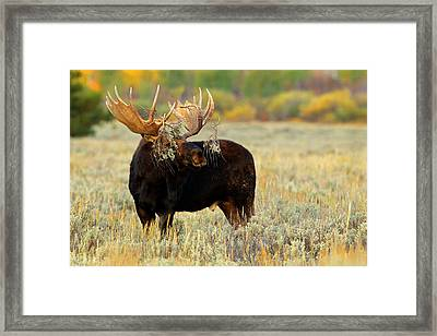Framed Print featuring the photograph Moose Camo by Aaron Whittemore