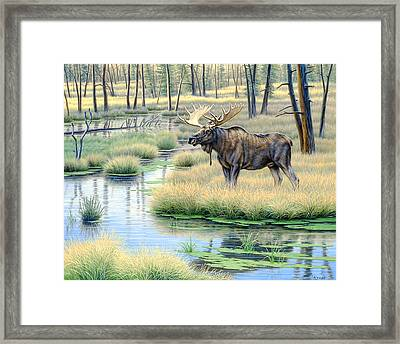 Moose Country Framed Print by Paul Krapf