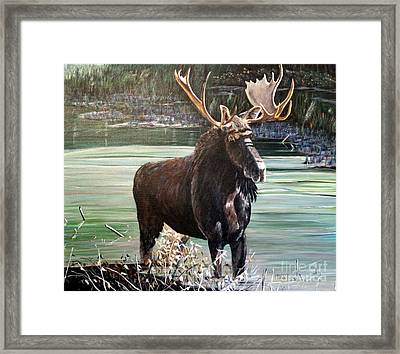 Moose County Framed Print