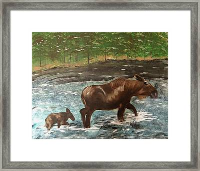 Moose Crossing Framed Print by Matthew Griswold