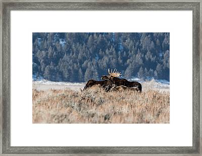 Framed Print featuring the photograph Moose Family Pride by Yeates Photography