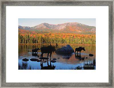 Moose Family Scenic Framed Print