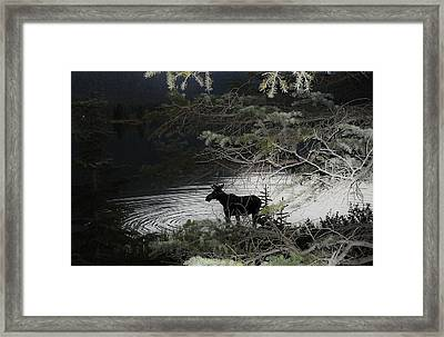 Moose Has Happy Hour Framed Print by Cathy Long