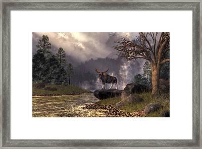 Moose In The Adirondacks Framed Print by Daniel Eskridge