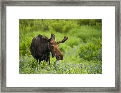 Spring In The Mountains Framed Print by Dustin  LeFevre