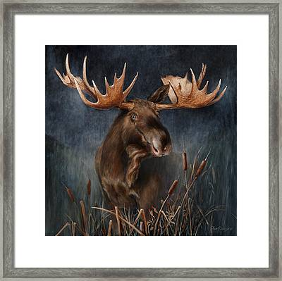 Moose In The Mist Framed Print by Rob Dreyer
