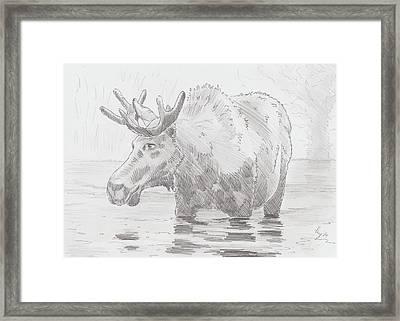Moose In Water Framed Print