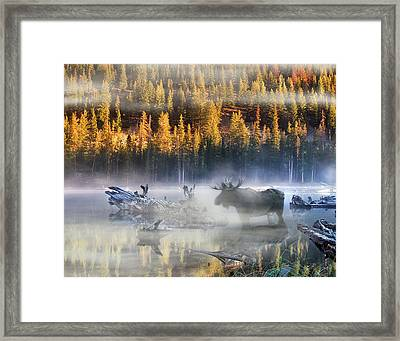 Moose Lake Framed Print by Leland D Howard