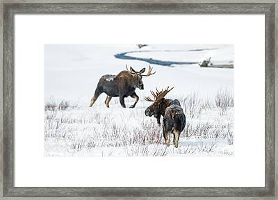 Moose Morning Framed Print