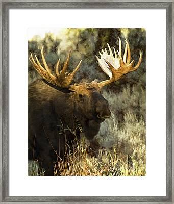 Moose -  Mr. Big Stuff Framed Print by Wildlife Fine Art