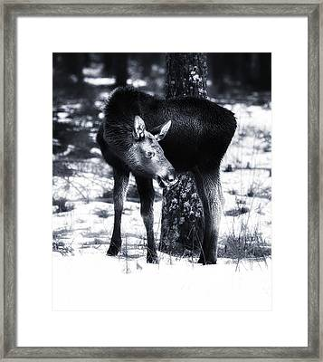 Framed Print featuring the photograph Moose by Rose-Maries Pictures