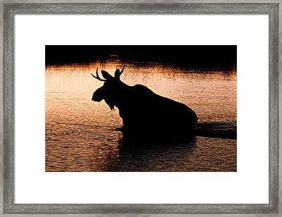 Moose Silhouette 3569   Framed Print by Brent L Ander