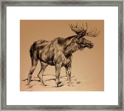 Moose Sketch Framed Print