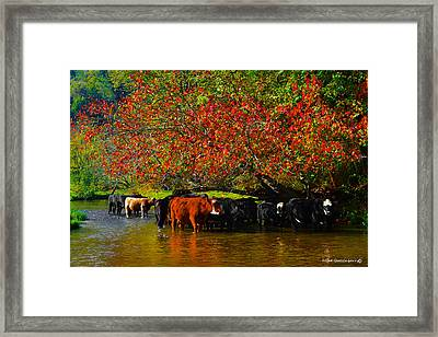 Mooving Into Fall Framed Print