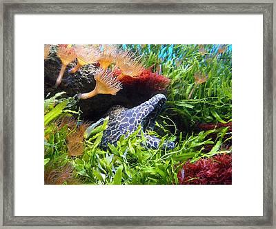 Moray Underwater Framed Print by Tilen Hrovatic