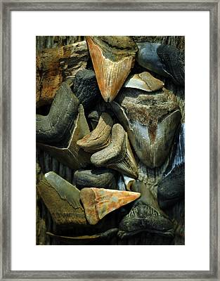 More Megalodon Teeth Framed Print