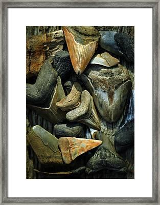 More Megalodon Teeth Framed Print by Rebecca Sherman