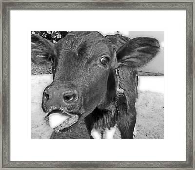 More Milk Please Framed Print by Victoria Sheldon