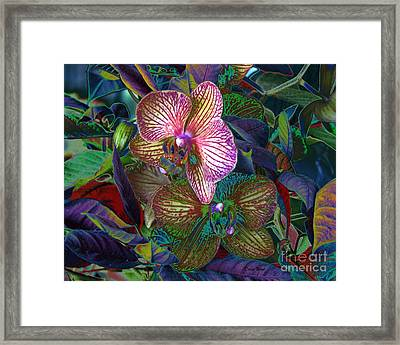 More Orchids Framed Print by Doris Wood