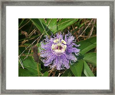 Framed Print featuring the photograph More Passion by Shirley Moravec
