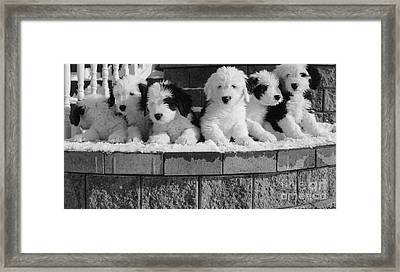 More Puppies Framed Print
