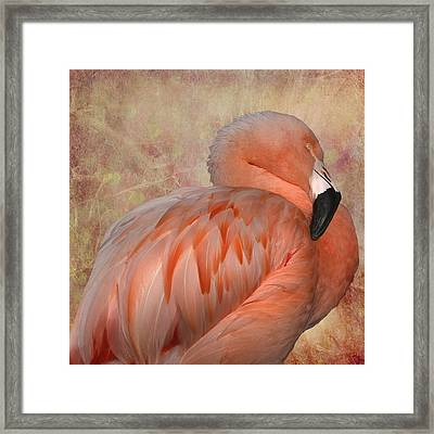 More Than A Lawn Ornament Framed Print