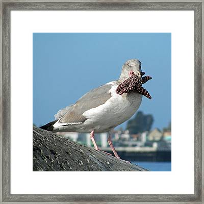 More Than He Can Chew  Framed Print