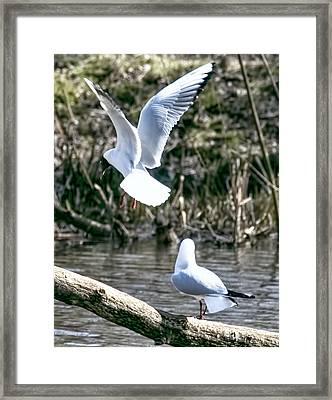 More To The Right  By Leif Sohlman Framed Print