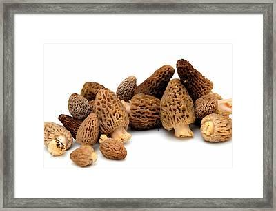Morel Mushroom Framed Print by Don Bendickson