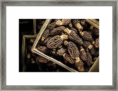 Morel Mushrooms Framed Print