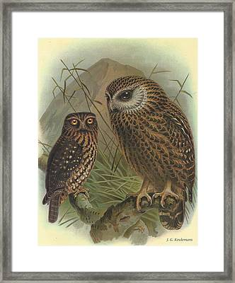 Morepork And Laughing Owl Framed Print by Rob Dreyer
