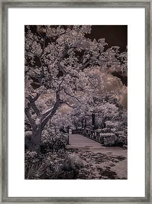 Morikami Gardens - Bridge Framed Print