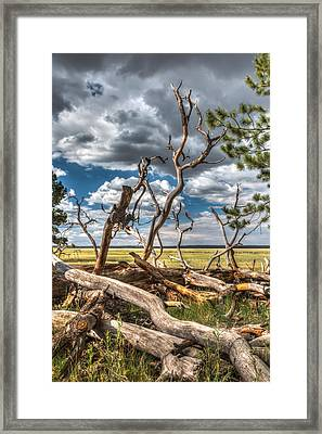 Mormon Lake Az Framed Print