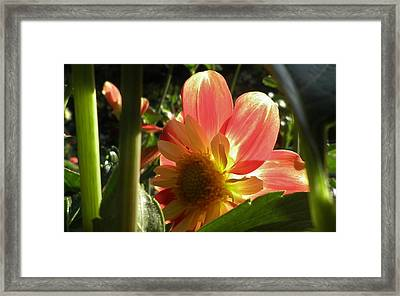 Mornin' Shine Framed Print