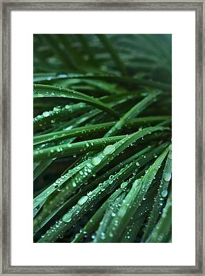 Morning After The Rain Framed Print