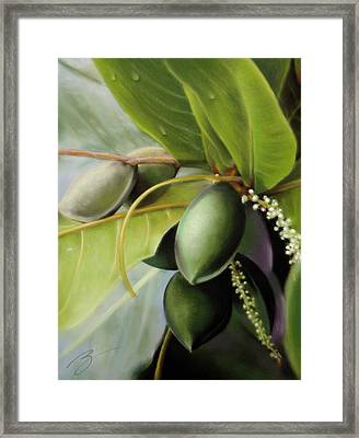 Morning Almonds Pastel Framed Print by Ben Kotyuk
