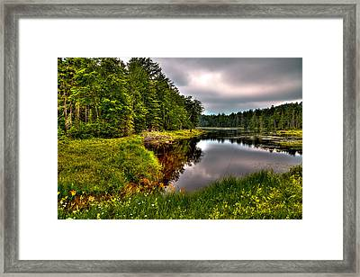 Morning At Fly Pond Framed Print by David Patterson