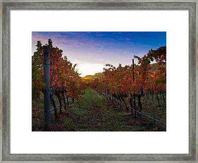 Morning At The Vineyard Framed Print by Bill Gallagher