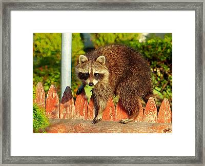 Morning Bandit Framed Print